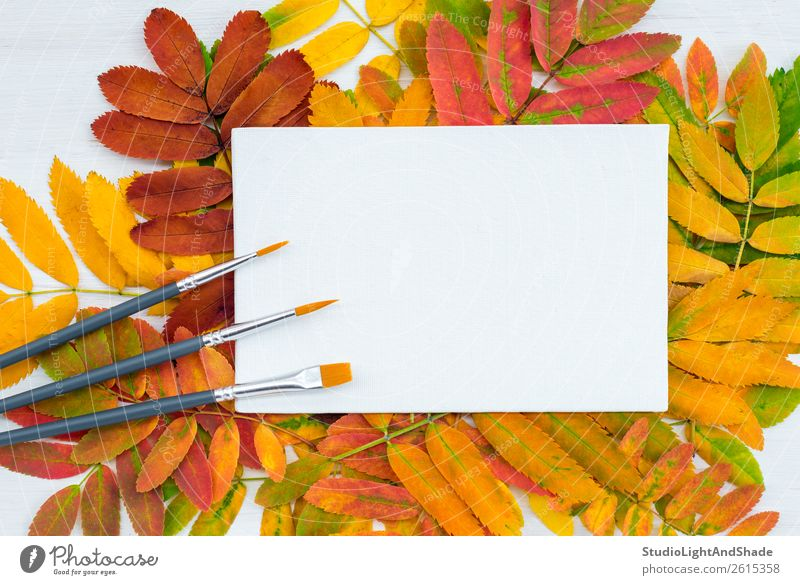 Paintbrushes and white canvas on colorful leaves background Design Beautiful Leisure and hobbies Handicraft Handcrafts Garden Decoration Education Study
