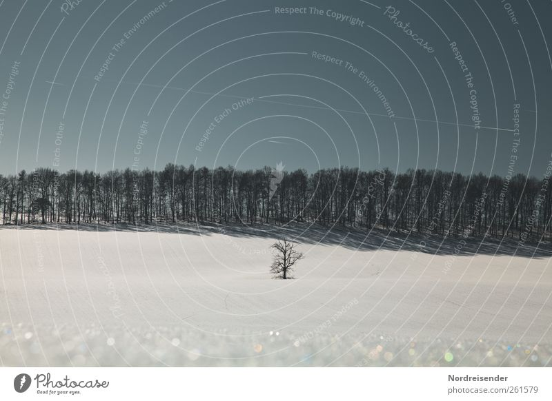 The last winter day Harmonious Calm Winter vacation Landscape Plant Sky Cloudless sky Climate Beautiful weather Ice Frost Snow Tree Field Forest Line Stripe