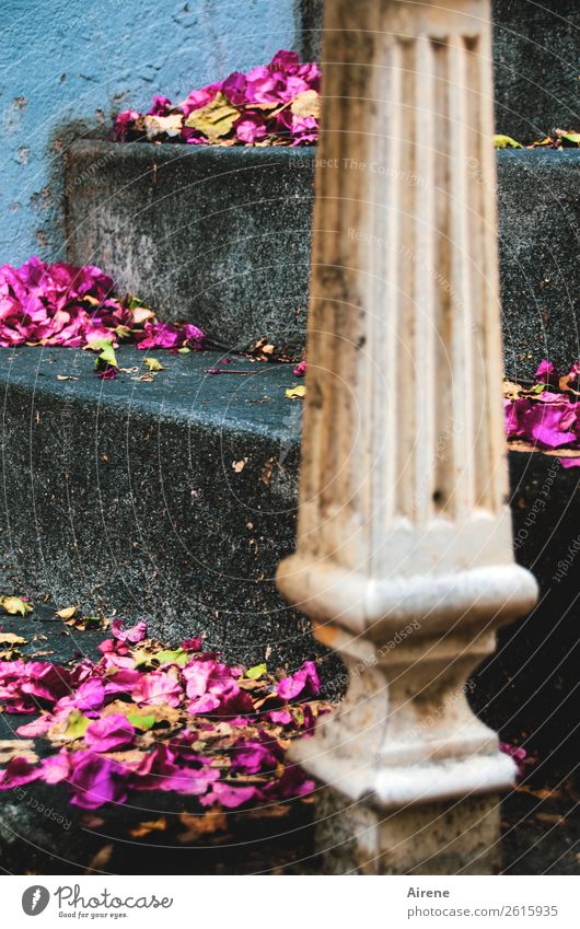 it was beautiful Flower Blossom Blossom leave Gritting material Old building Villa Stairs Column External Staircase Stone Line Retro Blue Gray Pink Romance