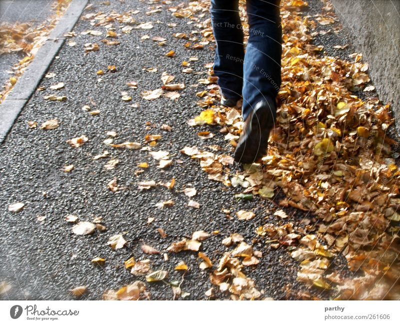 Quo vadis? Human being Masculine Feet 1 18 - 30 years Youth (Young adults) Adults Nature Autumn Walking Colour photo Exterior shot Day Rear view