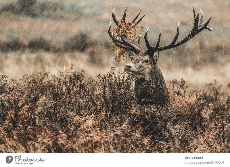 Red Deer Nature Colour Animal Forest Dark Autumn Grass Earth Brown Rain Wild Masculine Free Weather Wild animal Stand