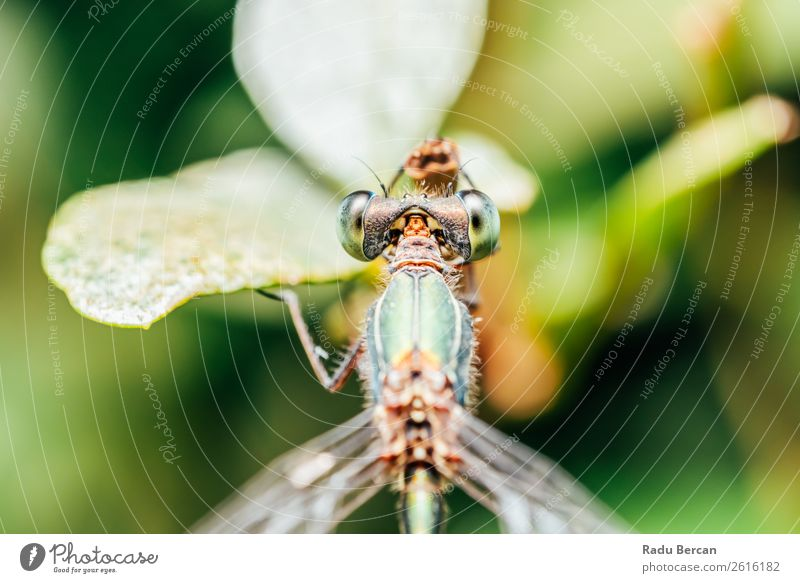 Dragonfly Macro Portrait In Nature Summer Environment Plant Animal Leaf Park Wild animal Fly Animal face Wing 1 Small Funny Natural Curiosity Cute Beautiful