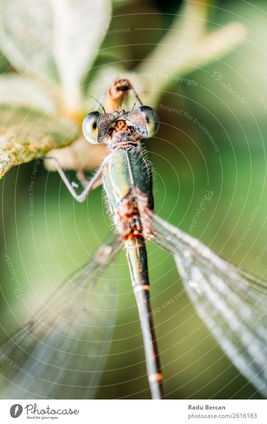 Dragonfly Macro Portrait In Nature Summer Environment Plant Animal Leaf Garden Park Wild animal Fly Animal face Wing 1 Small Natural Blue Multicoloured Yellow