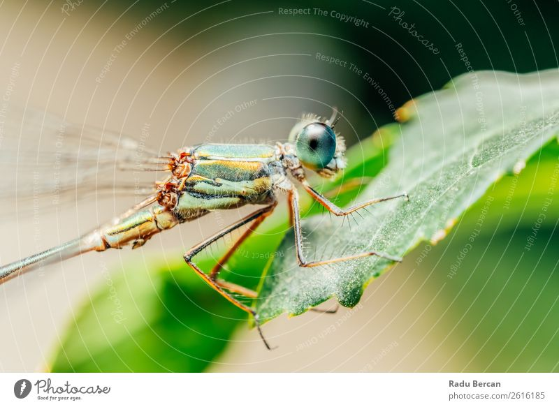 Dragonfly Macro Portrait In Nature Summer Plant Blue Colour Beautiful Green Animal Leaf Yellow Environment Natural Small Garden Wild Park