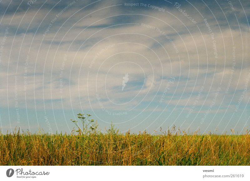 Sky Summer Clouds Calm Autumn Landscape Freedom Grass Horizon Contentment Field Natural Romance Beautiful weather Seasons Clouds in the sky