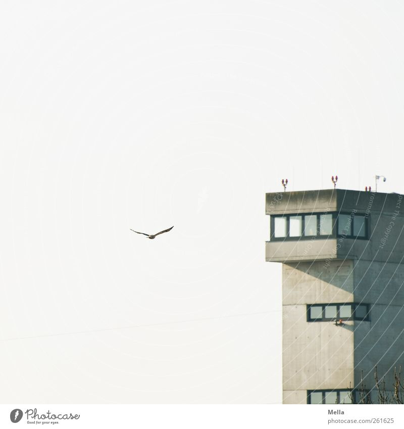 Sky Animal Environment Freedom Building Air Funny Bird Flying Natural Manmade structures Harbour Airport Testing & Control Air Traffic Control Tower