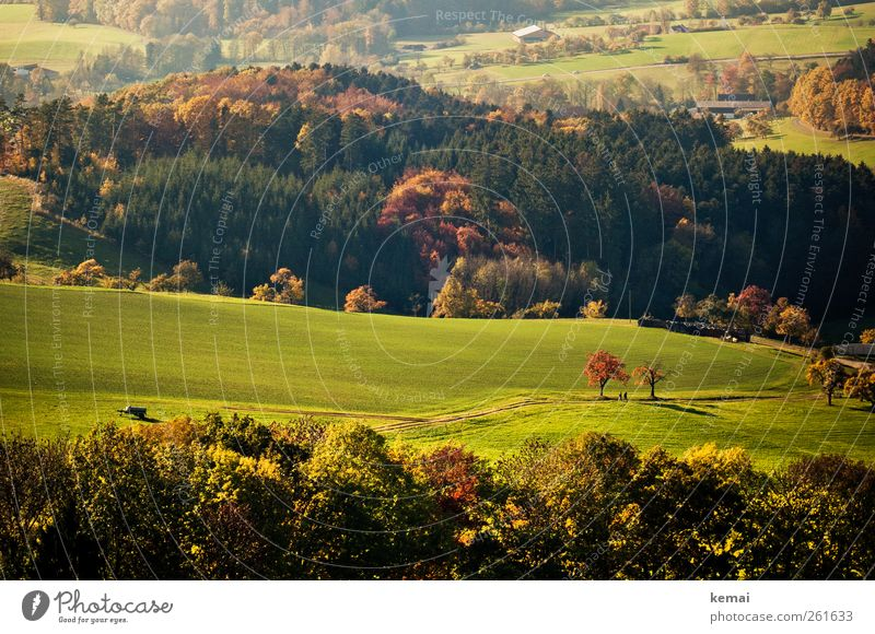 autumn days Environment Nature Landscape Plant Sunlight Autumn Beautiful weather Tree Grass Bushes Foliage plant Wild plant Meadow Field Forest Hill Green