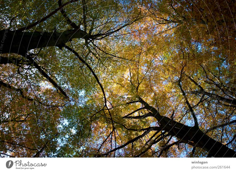 treetops Nature Plant Sky Autumn Tree Leaf Germany North Rhine-Westphalia Wuppertal barmen Treetop Above Tall Upward Park Forest Authentic Simple Far-off places