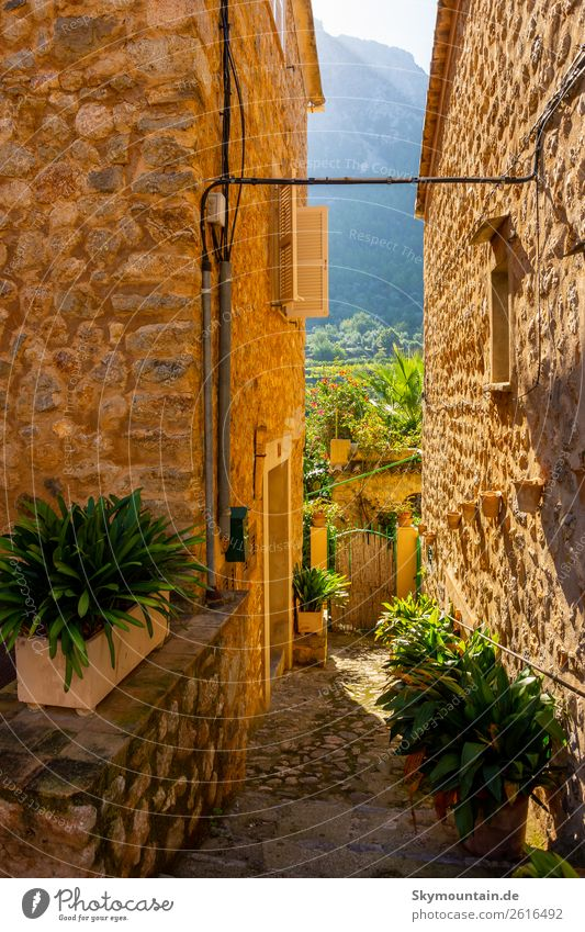 Planted alleys of Sóller, Mallorca Flower Foliage plant Pot plant Village Fishing village Small Town Outskirts Old town Deserted House (Residential Structure)