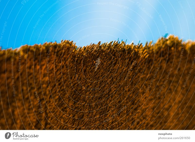 narrow degree Sky Esthetic Marsh grass Reet roof Corner Colour photo Multicoloured Exterior shot Structures and shapes Copy Space top Day Irritation
