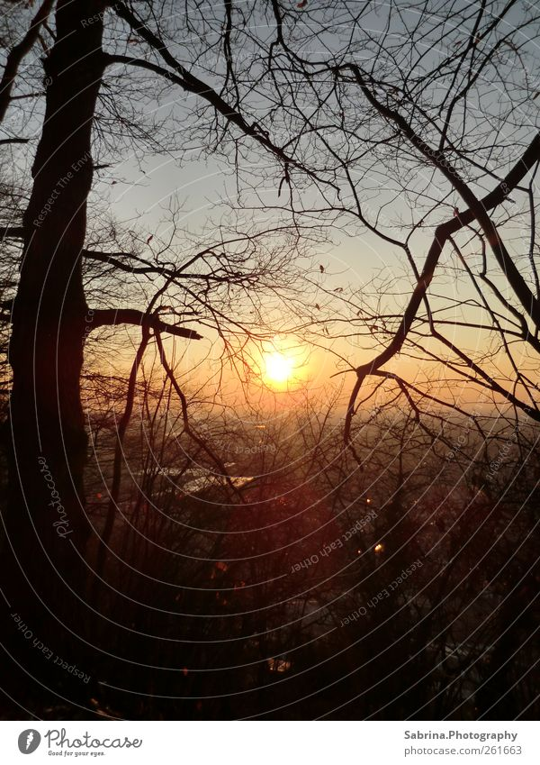 Sunrise or sunset? Hiking Nature Landscape Sky Winter Beautiful weather Tree Field Forest Loneliness Uniqueness Harmonious Warm light Calm Deserted Evening