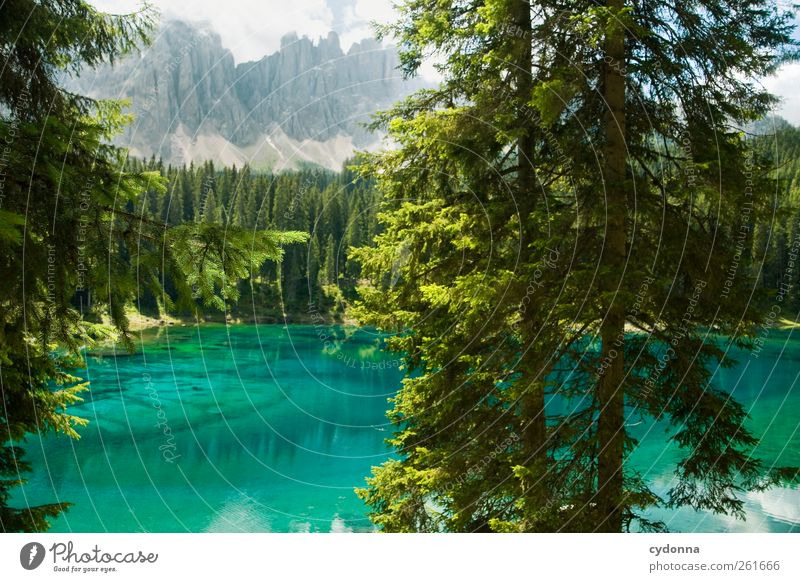 Nature Water Blue Beautiful Tree Vacation & Travel Summer Loneliness Calm Forest Far-off places Environment Landscape Mountain Freedom Lake