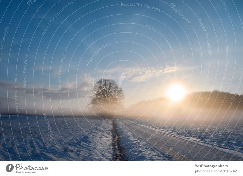 Sunrise over a country road covered in snow Calm Vacation & Travel Tourism Winter Snow Nature Landscape Horizon Weather Beautiful weather Fog Meadow Street