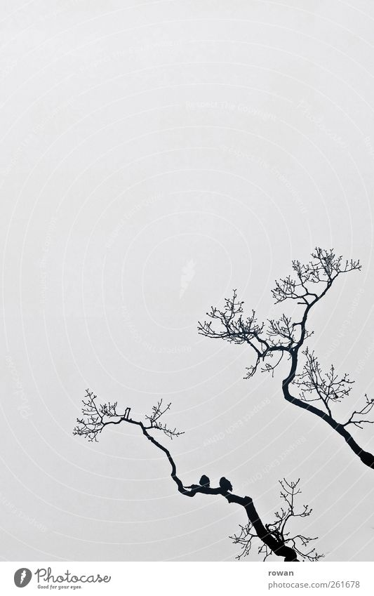 Nature Tree Animal Winter Calm Love Dark Sadness Friendship Bird Together Pair of animals Sit Fog In pairs Gloomy
