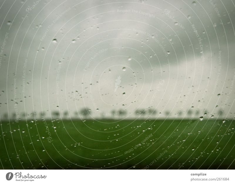 this isn´t happiness Autumn Winter Gray Green Drops of water Rain Avenue Tree Car Window Slice Field Meadow Nature Sadness Dark clouds horrid Loneliness
