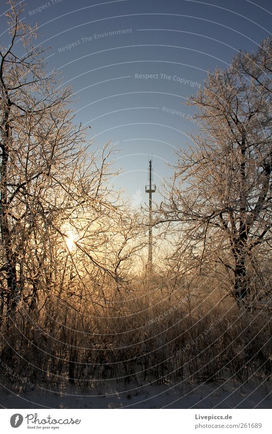 Reception secure! Nature Landscape Sun Sunrise Sunset Sunlight Winter Beautiful weather Ice Frost Snow Plant Tree Bushes Wood Center point Transmitting station