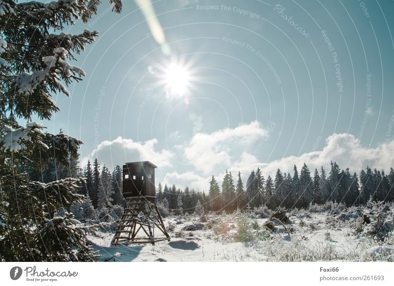 Sky Blue Green White Tree Loneliness Winter Clouds Landscape Relaxation Forest Love Snow Movement Wood Brown