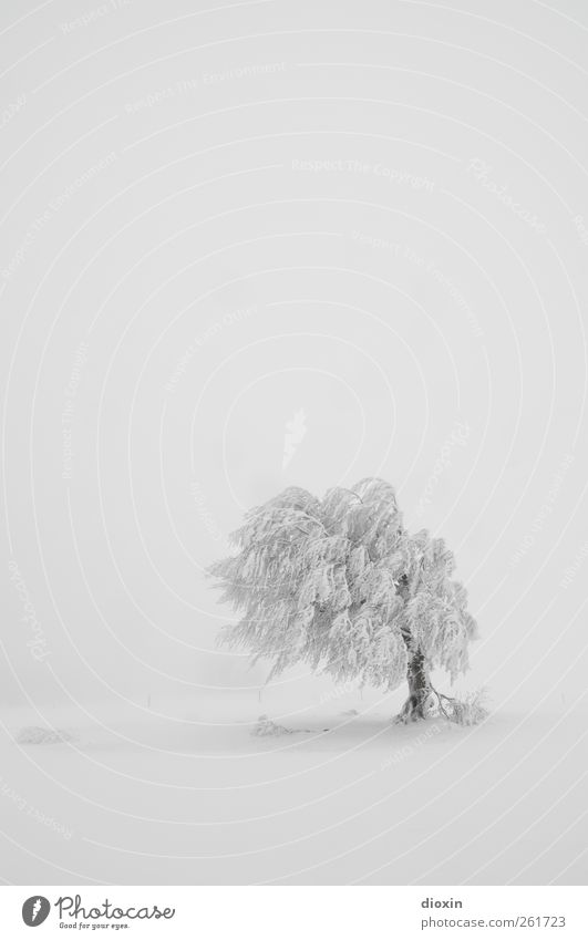 tree praises | Last Tree Standing Winter Snow Winter vacation Environment Nature Landscape Plant Climate Weather Bad weather Storm Gale Ice Frost Snowfall