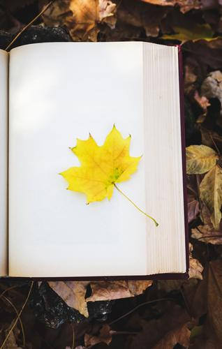 yellow maple leaf Lifestyle Book Nature Autumn Tree Leaf Park Forest Paper Old Study Reading Retro Brown Yellow Gold Idea Idyll background vintage Literature