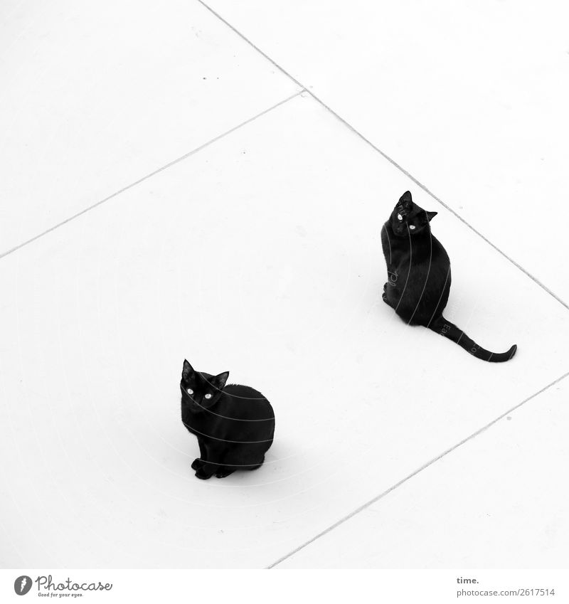 Cat Town Animal Calm Black Natural Together Line Sit Wait Observe Cool (slang) Curiosity Roof Attachment Serene