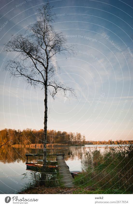 quiet autumn Environment Nature Landscape Plant Elements Water Sky Horizon Autumn Beautiful weather Tree Grass Bushes Rowboat Footbridge Jetty Wood Stand Old