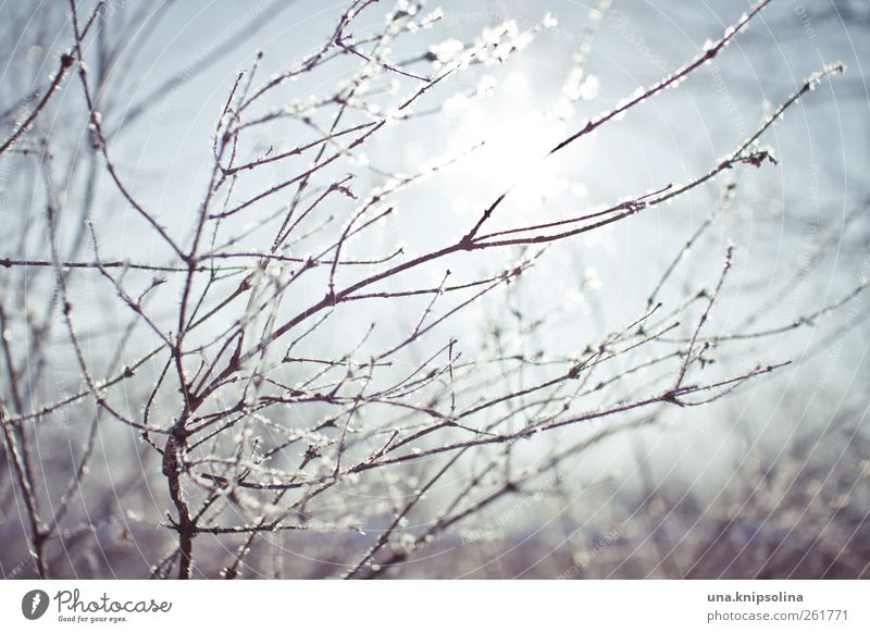 wintasun Nature Plant Winter Beautiful weather Ice Frost Snow Bushes Glittering Fresh Cold Natural Environment Branch Colour photo Subdued colour Exterior shot
