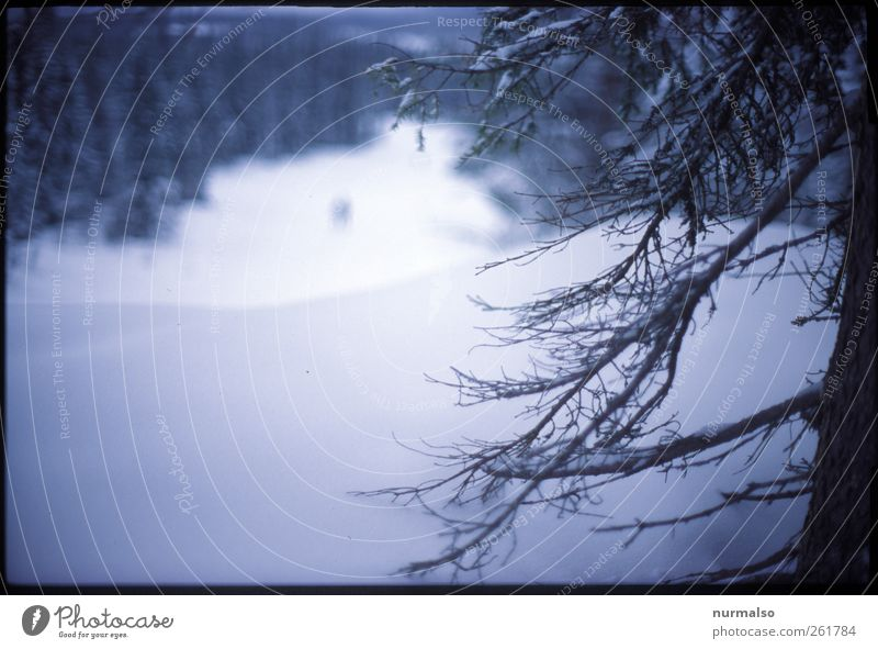 Human being Nature Plant Winter Animal Forest Landscape Dark Cold Snow Art Moody Ice Climate Lifestyle Frost