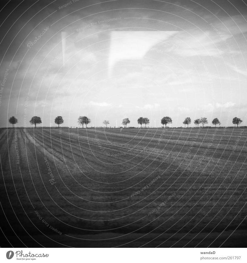 Sky Beautiful Tree Clouds Think Horizon Earth Field