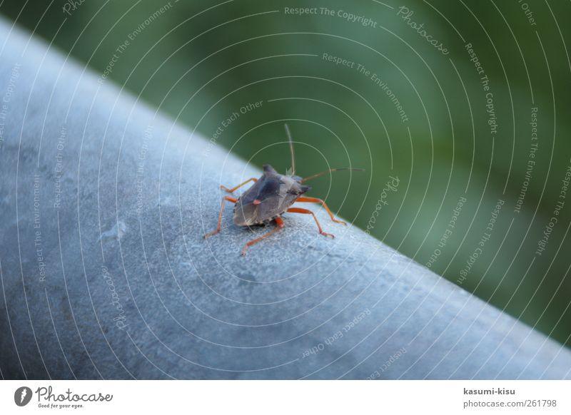 Green Environment Life Gray Beetle Crawl
