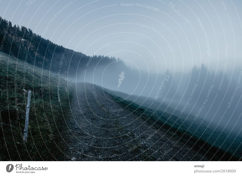 Fog on the Wirzweli Environment Nature Landscape Autumn Climate Weather Bad weather Meadow Dark Cold Blue Lanes & trails Colour photo Subdued colour