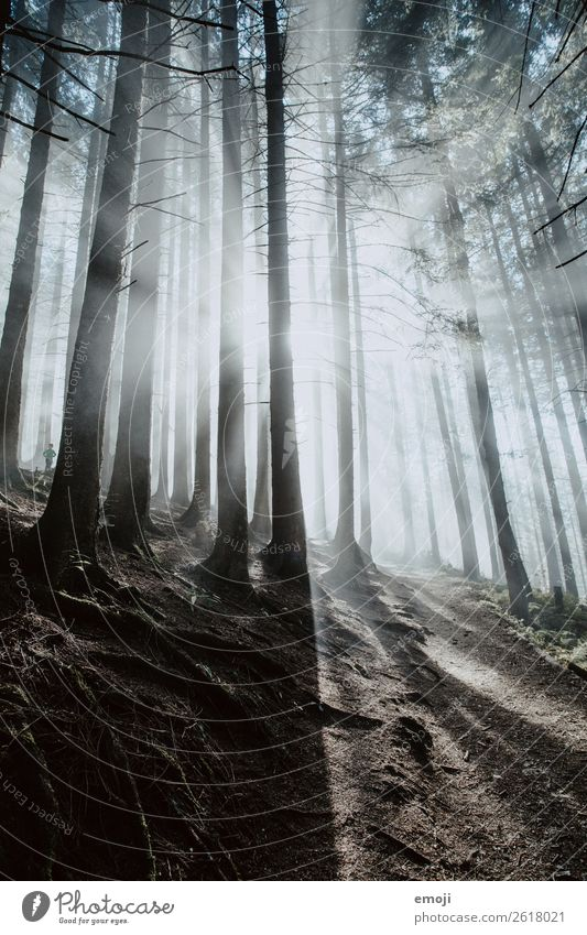 Nature Landscape Tree Forest Dark Environment Cold Exceptional Fog Weather Climate