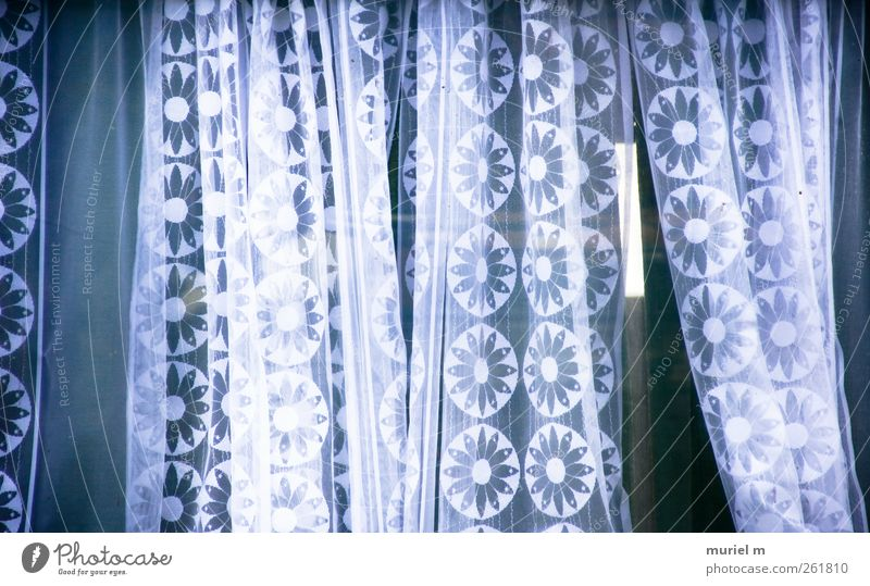 flower curtains House (Residential Structure) Hut Window Esthetic Beautiful White Colour photo Deserted Day