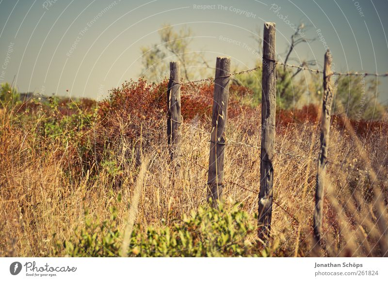 The fence Vacation & Travel Trip Adventure Far-off places Summer Summer vacation Sun Environment Nature Landscape Beautiful weather Drought Fence Fence post