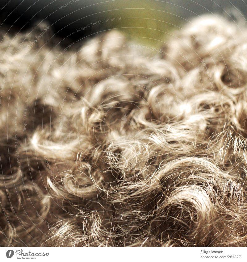 Hair and hairstyles Blonde Cute Pelt Curl Brunette Bangs Carpet Scissors Haircut Strand of hair Hair curlers Shock of hair Hair Stylist Hairband Rug