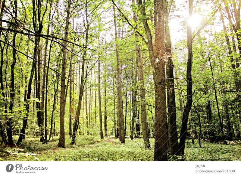 Forest 2 Science & Research Advancement Future Energy industry Renewable energy Solar Power Environment Nature Sunlight Spring Summer Tree Bushes Moss Hiking