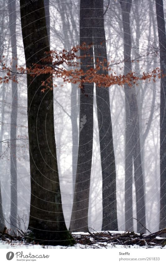 forest silence Nature Landscape Winter Fog Snow Snowfall Tree Twig Forest Snowscape Cloud forest Beautiful Moody Calm Loneliness Winter mood Misty atmosphere