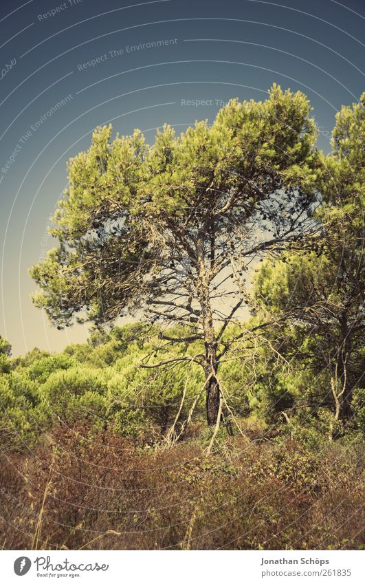 The tree next to the path Vacation & Travel Trip Adventure Far-off places Freedom Summer Summer vacation Environment Nature Landscape Plant Beautiful weather