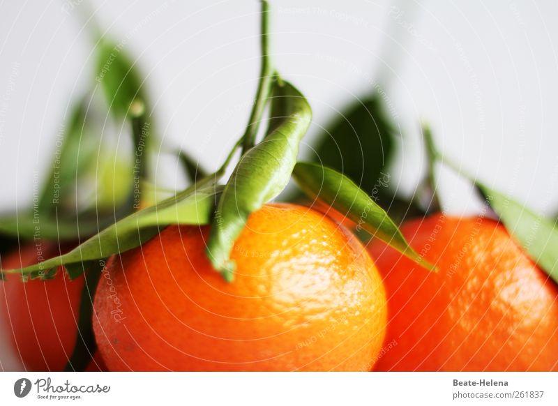 Nature Plant Green Healthy Food Orange Fruit Fresh Orange Esthetic Nutrition To enjoy Fragrance Exotic Refreshment Vegetarian diet