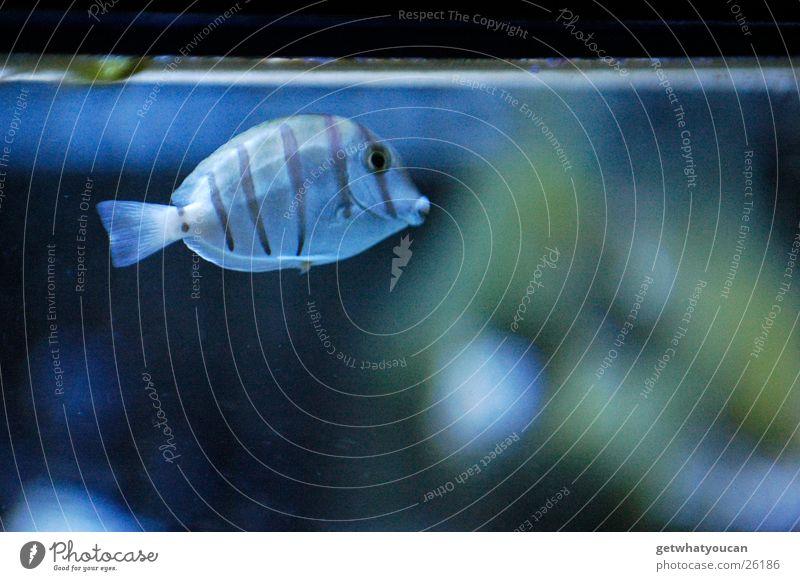 Water Loneliness Animal Cold Glass Fish Dive Captured Aquarium Window pane Edge Surface