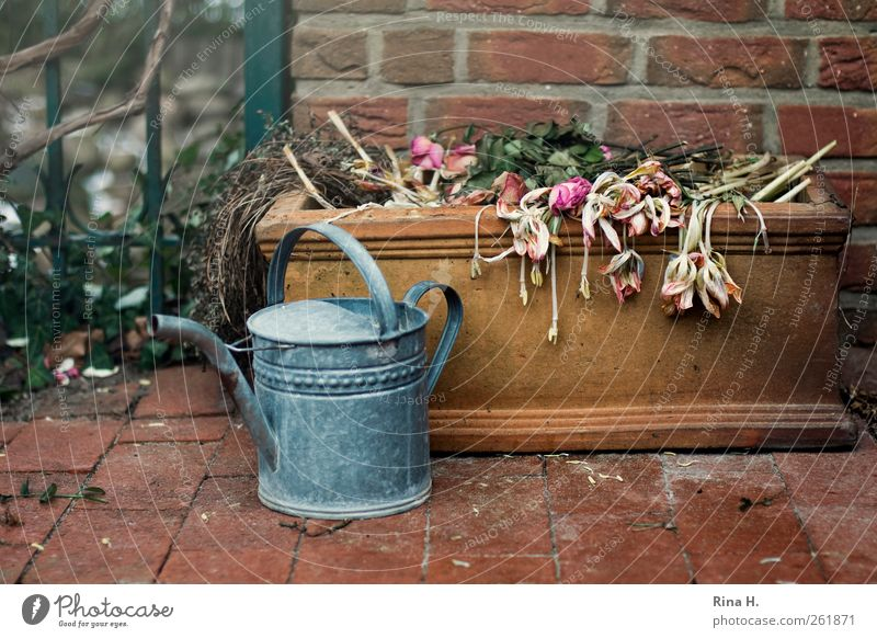 Flower cemetery Living or residing Winter Wall (barrier) Wall (building) Terrace Watering can Faded To dry up Authentic Multicoloured Emotions Calm Transience