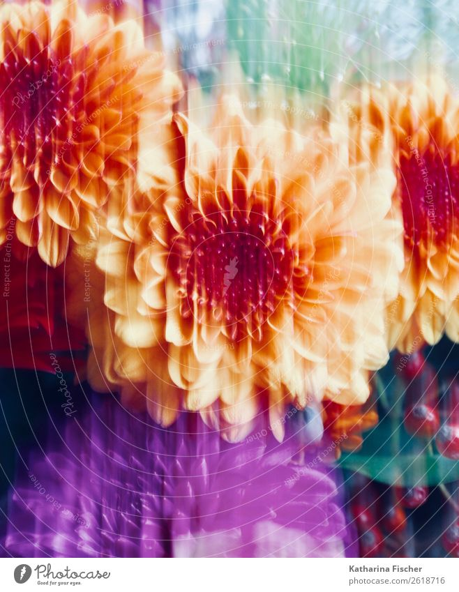 floral picture Art Painting and drawing (object) Nature Plant Flower Blossom Dahlia Blossoming Illuminate Blue Brown Multicoloured Yellow Green Violet Orange