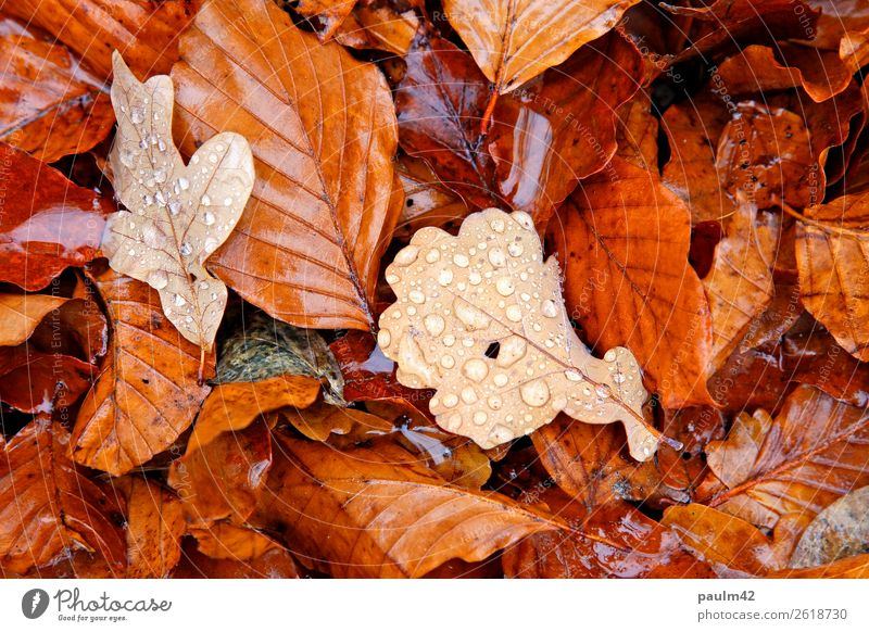 Wet leaves Nature Plant Drops of water Weather Bad weather Leaf Forest Emotions Moody Sadness Concern Grief Loneliness Disappointment Cold Religion and faith