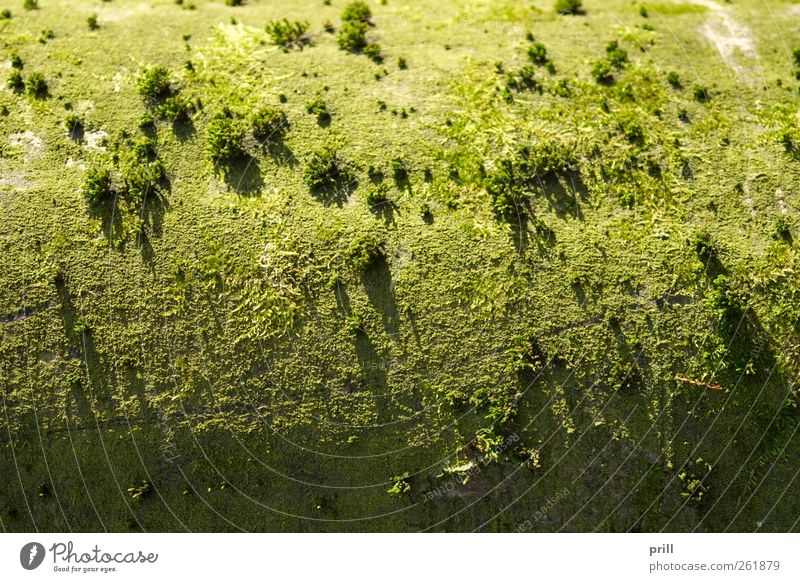 Nature Green Tree Plant Landscape Above Small Background picture Exceptional Growth Soft Curve Moss Botany Tree bark Bend
