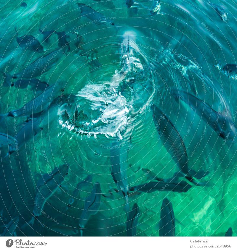 Nature Summer Blue Beautiful Green Water Ocean Animal Life Swimming & Bathing Waves Elegant Beautiful weather Speed Fish Turquoise