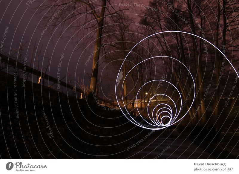 Tree Plant Black Forest Dark Lanes & trails Line Illuminate Circle Round Violet Spiral Visual spectacle Abstract Long exposure Tracer path