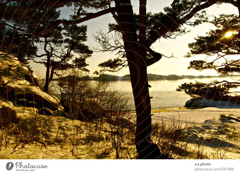 Sunday Nature Landscape Earth Tree Forest Beach mandal Norway Illuminate Brown Yellow Gold Moody Optimism Power Calm Loneliness Relaxation Horizon Life Pure
