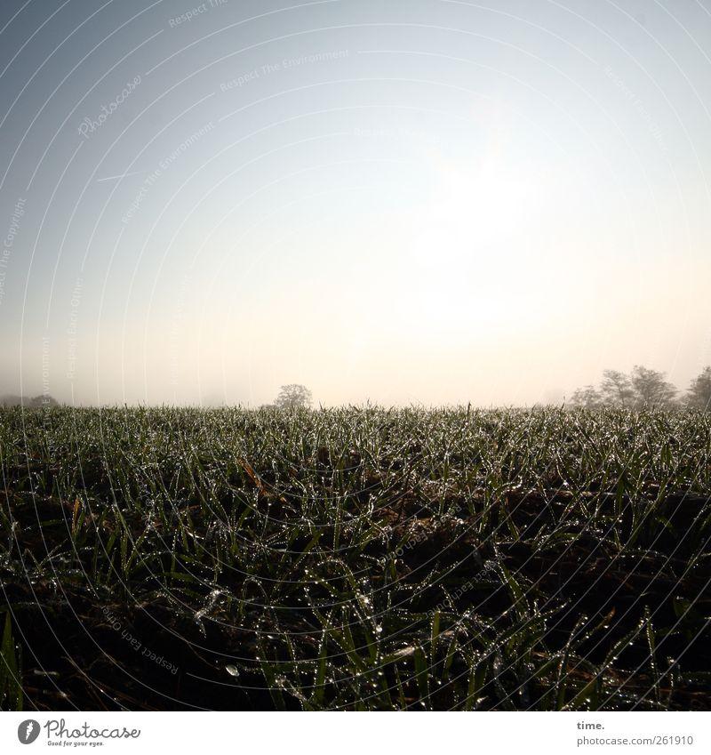 Nature Plant Environment Autumn Landscape Earth Field Esthetic Cloudless sky Agricultural crop