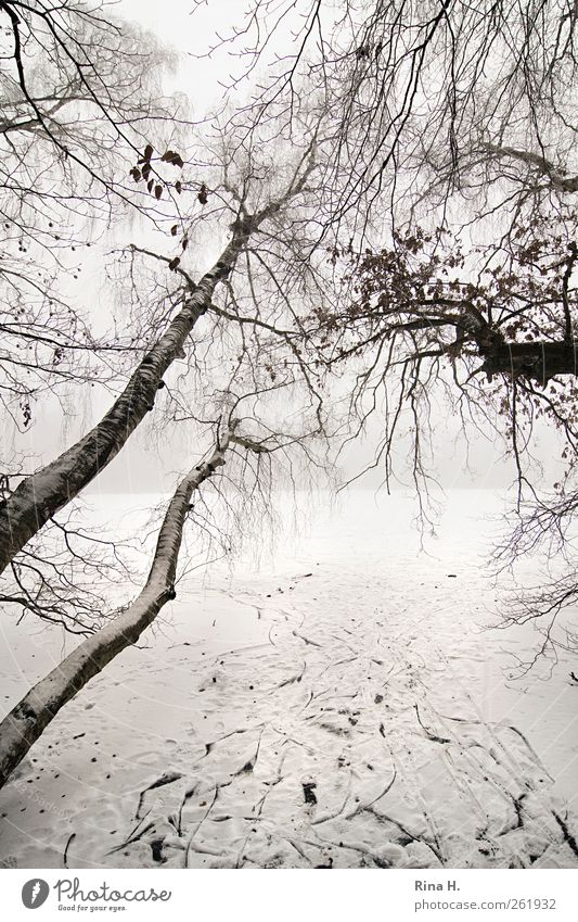 change of direction Winter Bad weather Fog Ice Frost Snow Tree Lakeside Growth Bright Tilt Birch tree Tracks Subdued colour Exterior shot Deserted