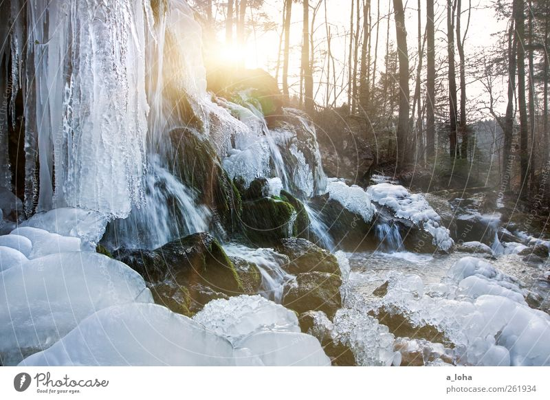 Nature Water Tree Winter Forest Landscape Cold Ice Rock Climate Frost Beautiful weather Waterfall Flow Minus degrees