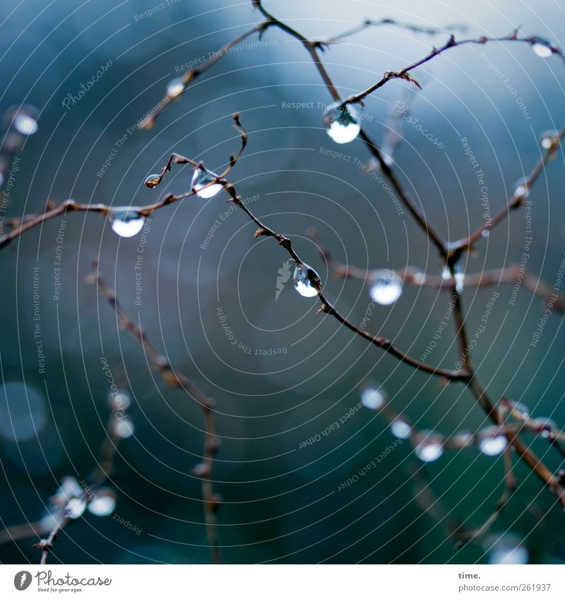 Nature Blue Green Winter Environment Cold Garden Rain Wet Natural Fresh Drops of water Transience Branch Fluid Damp